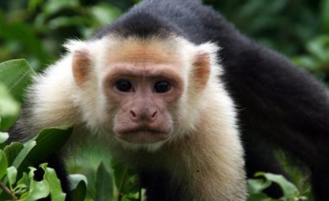 Maymunlar parayı kullanmayı öğrenip bakın ne yaptılar!